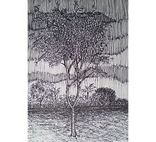Rain Tree Photographic Print