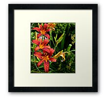 Waterfall of Lilies... Framed Print
