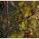 A spider cobweb. by Brown Sugar , wiews (198) thanks ! by AndGoszcz