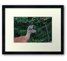 Deer Lady....! Framed Print