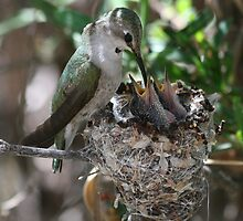 Momma Costa's hummingbird with little ones. by Bluecornstudios