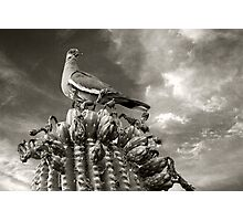 Cactus Dove Photographic Print