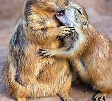 A Love Bite by Sue  Cullumber