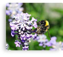 Peebles Bumblebee on Lavendar Canvas Print