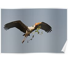 painted stork flight  Poster
