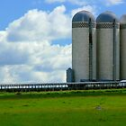 Skyscrapers of the Prairie-Luverne, Mn by hastypudding