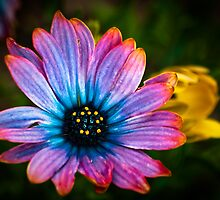 Petal Pallette by Charles Plant