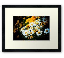 Summer Daisies Framed Print