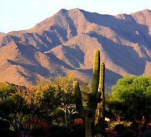 South Mountain, Arizona by Dave & Trena Puckett