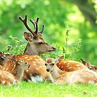 The family outing by Alan Mattison