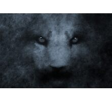 PANTHERA LEO VII Photographic Print