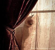 She Who Waits by Yvonne Roberts