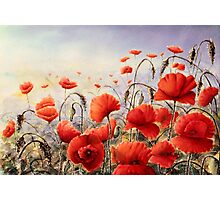 A Dash of Scarlet on a Steel Dawn Photographic Print