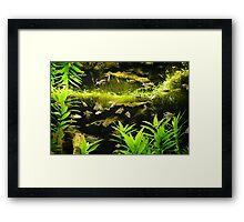 Green Waters Framed Print