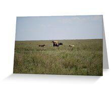Lion kill Buffalo - full frame Greeting Card