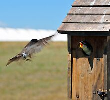 Hurry!  I'm Starvin'! by Donna Ridgway