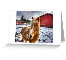 Fluffy Pony Greeting Card