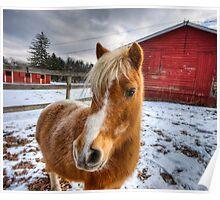 Fluffy Pony Poster