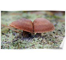 Mushroom Mushroom Poster