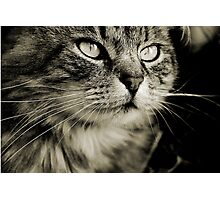 LE CHAT TABBY II Photographic Print