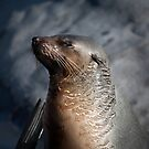 Seal Sunning by Jack Jansen