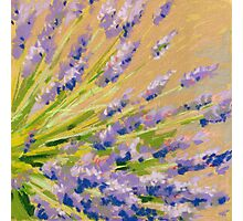 Lavender flowers in pastel. Painting Photographic Print