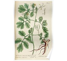 A curious herbal Elisabeth Blackwell John Norse Samuel Harding 1737 0234 Great Celandine or Yellow Horn Poppy Poster