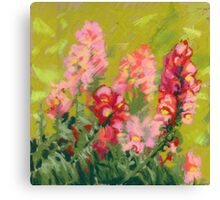Snapdragon (antirrhinum) flowers. Painted with pastels.  Canvas Print