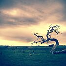 Lone Tree by farmboy