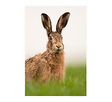 Brown Hare Portrait Photographic Print