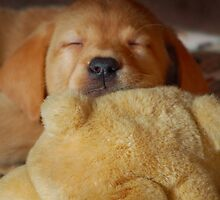 First Teddy Snooze by Diane E. Berry