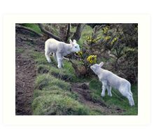 Lambs Puppy Food - Donegal Ireland  Art Print