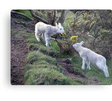 Lambs Puppy Food - Donegal Ireland  Metal Print
