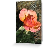 Red Yellow Rose Greeting Card