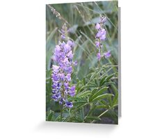 Idaho Lupine1 Greeting Card