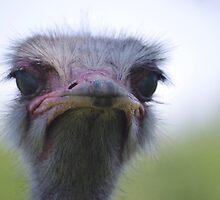 Ostrich Portrait by Jessica Dzupina