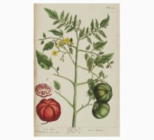 A curious herbal Elisabeth Blackwell John Norse Samuel Harding 1737 0342 Love Apple or Tomato Kids Tee