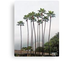 Palm Trees in Florida Canvas Print