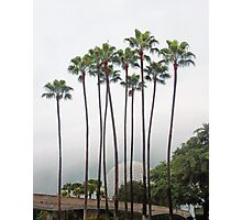 Palm Trees in Florida Photographic Print