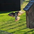 Back Lit Flight by Donna Ridgway