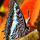 A Butterfly's Snack Time by Colleen Rohrbaugh