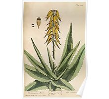 A curious herbal Elisabeth Blackwell John Norse Samuel Harding 1737 0586 The Common Aloes Poster