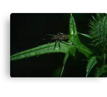 Prickly and Stinky Canvas Print