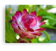 Pink and Blink White Stripes Canvas Print