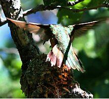 Hummingbird Nest Photographic Print