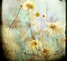 daisy 01 by Jackie Cooper