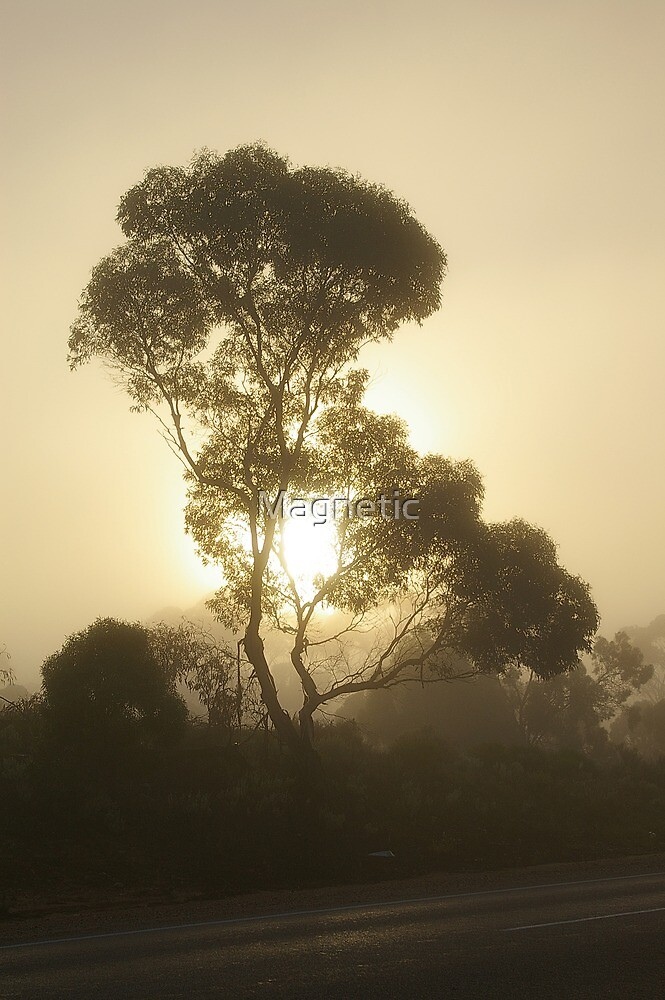 Nullabor Fog by Magnetic