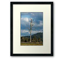 OLD TREE SUNSHINE COAST Framed Print