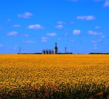 Yellow & Blue by Larry Trupp