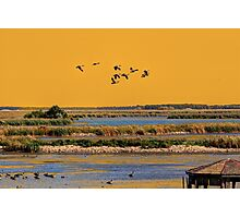 Early Morn on the Marsh Photographic Print